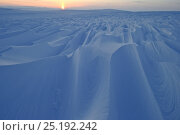 Купить «Wind sculpted snow drifts, Wrangel Island, Far Eastern Russia, March 2011.», фото № 25192242, снято 14 декабря 2019 г. (c) Nature Picture Library / Фотобанк Лори