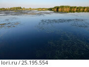 Купить «Landscape from the Danube Delta, Romania. The reeds of the Delta form one of the largest continuous reedbeds in the world. June 2013.», фото № 25195554, снято 21 сентября 2018 г. (c) Nature Picture Library / Фотобанк Лори