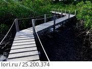 Bridges through mangrove swamps on coast of Orango Island, Guinea-Bissau, December 2013. Стоковое фото, фотограф Enrique Lopez-Tapia / Nature Picture Library / Фотобанк Лори