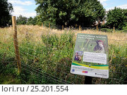 Купить «London House Sparrow Parks Project sign showing an area of Laycock Street Park in Highbury fenced in and planted with wild flowers as an experiment by...», фото № 25201554, снято 15 декабря 2017 г. (c) Nature Picture Library / Фотобанк Лори