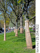 Купить «Bamboo wrapping tree guards around trees lower trunk to protect their bark being striped by dogs, Highbury, London Borough of Islington, England, UK, April 2010.», фото № 25204822, снято 15 августа 2018 г. (c) Nature Picture Library / Фотобанк Лори