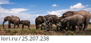 Купить «African elephants (Loxodonta africana) gathering at a waterhole. Masai Mara National Reserve, Kenya. Taken with remote wide angle camera.», фото № 25207238, снято 16 июля 2020 г. (c) Nature Picture Library / Фотобанк Лори
