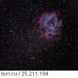 Купить «The Rosette Nebula / Caldwell 49 and in the Monoceros Cloud of the Milky Way. Eastern Colorado, USA. Taken on the night of 7-8 October  2013, with digital focus stacking.», фото № 25211194, снято 12 декабря 2017 г. (c) Nature Picture Library / Фотобанк Лори