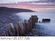 Купить «Wooden groyne on Bossington Beach, Exmoor National Park, Somerset. March 2012.», фото № 25217726, снято 16 июля 2018 г. (c) Nature Picture Library / Фотобанк Лори