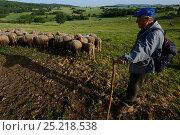 Купить «Shepherd with his sheep, Dolni Glavanak, Eastern Rhodope Mountains, Bulgaria, May 2013.», фото № 25218538, снято 24 мая 2018 г. (c) Nature Picture Library / Фотобанк Лори