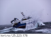Купить «North Sea trawler 'Ocean Harvest' in heavy seas. North Sea, May 2013. All non editorial uses must be cleared individually.», фото № 25223178, снято 16 октября 2018 г. (c) Nature Picture Library / Фотобанк Лори