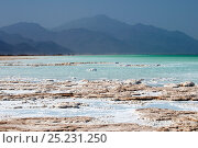Купить «Lake Assal -  Africas lowest point at 515 feet below sea level, with dense concentrations of salt on the shore line, Djibouti, March 2008», фото № 25231250, снято 21 июля 2019 г. (c) Nature Picture Library / Фотобанк Лори