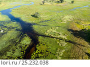 Okavango delta, aerial view, Botswana, May 2010. Стоковое фото, фотограф Denis-Huot / Nature Picture Library / Фотобанк Лори