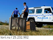 Купить «ALE (Administrative Law Enforcement) Police with confiscated turtle doves (Streptopelia turtur) and equipment from dove trapping area, during BirdLife Malta Springwatch Camp, April 2013», фото № 25232902, снято 18 июля 2018 г. (c) Nature Picture Library / Фотобанк Лори