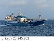 Купить «Fraserburgh pelagic trawler 'Forever Grateful' fishing close to Eshaness, Shetland Isles, Scotland, UK, October 2012.», фото № 25245802, снято 22 мая 2018 г. (c) Nature Picture Library / Фотобанк Лори