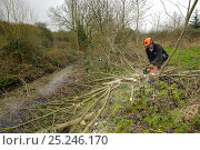 Купить «A volunteer from Wildwood trust cuts down tree to improve improve water vole habitat on a stream in Kent and to allow growth of bankside vegetation, East Malling, Kent England, February 2011», фото № 25246170, снято 24 сентября 2018 г. (c) Nature Picture Library / Фотобанк Лори