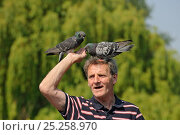 Купить «Man with feral pigeons (Columba livia) perched on his head, Regents Park, London, England, UK, April», фото № 25258970, снято 12 декабря 2017 г. (c) Nature Picture Library / Фотобанк Лори