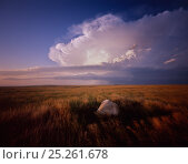 Cheyenne River Sioux Tribal Park with glacial remnant boulders amid grassland and on-coming storm clouds, Montana, USA. Стоковое фото, фотограф Jack Dykinga / Nature Picture Library / Фотобанк Лори