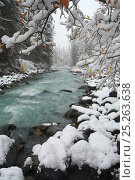 Купить «Russian winter in Altai Mountains, gorge valley of the river Kucherla, famous for its milky blue-and-green waters with riparian dark forest of Siberian...», фото № 25263638, снято 24 мая 2018 г. (c) Nature Picture Library / Фотобанк Лори