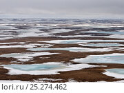 Купить «Aerial view of partially frozen tundra, Taimyr Peninsula, Siberia, Russia, June 2010», фото № 25274462, снято 14 октября 2019 г. (c) Nature Picture Library / Фотобанк Лори
