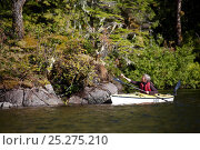 Купить «Woman paddling kayak along the coast of the Great Bear Rainforest, British Columbia, Canada, September 2010», фото № 25275210, снято 26 апреля 2018 г. (c) Nature Picture Library / Фотобанк Лори
