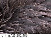Купить «Crowned crane (Balearica regulorum) close-up of feathers, captive», фото № 25282586, снято 25 апреля 2019 г. (c) Nature Picture Library / Фотобанк Лори