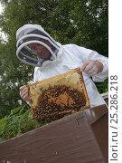 Купить «Bee keeper, Richard Emery, attending Honey bee (Apis mellifera) beehive at a heathland site in Suffolk, UK, August 2011. Model released», фото № 25286218, снято 19 августа 2018 г. (c) Nature Picture Library / Фотобанк Лори
