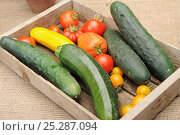 Купить «Small collection of freshly picked home grown vegetables, Tomatoes (Solanum lycopersicum), Courgettes (Cucurbita pepo) and Cucumber (Cucurbita sativus) Norfolk, UK, August», фото № 25287094, снято 18 июля 2018 г. (c) Nature Picture Library / Фотобанк Лори