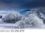 Купить «Snow-covered Piano Grande in winter. Monti Sibillini National Park, Umbria, Italy, February 2010.», фото № 25296870, снято 4 апреля 2020 г. (c) Nature Picture Library / Фотобанк Лори