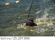 Купить «Fisherman protected with a groin and face guard made of stainless steel brings together the net to take out the fish from a fish cage. These men harvested...», фото № 25297890, снято 24 апреля 2018 г. (c) Nature Picture Library / Фотобанк Лори