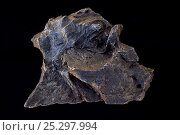 Купить «Meteorite, composed primarily Kamacite (about 90%) which is an iron nickel alloy and aso has Taenite, Plessite, Schreibersite, Rhabites, Troilite, Chromite...», фото № 25297994, снято 26 мая 2018 г. (c) Nature Picture Library / Фотобанк Лори