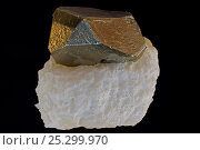 Купить «Pyrite on Talc. Pyrite (FeS2, iron sulfide) is popularly known as 'fool's gold', formerly used in the production of sulfuric acid. Talc is easily distinguishable...», фото № 25299970, снято 14 декабря 2017 г. (c) Nature Picture Library / Фотобанк Лори