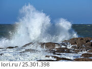 Купить «Waves crashing onto rocks along the Normandy coast, France, October 2010.», фото № 25301398, снято 17 августа 2018 г. (c) Nature Picture Library / Фотобанк Лори