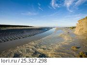 Купить «Creek at low tide, Baie de Mont St Michel, La Roche Torin, Normandy, January 2008», фото № 25327298, снято 29 мая 2020 г. (c) Nature Picture Library / Фотобанк Лори