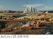 """Petrified tree logs and stumps on slopes of badlands with banded sedimentary rock """"haystacks"""" in background, Petrified Forest National Park, Arizona, USA, March 2008. Стоковое фото, фотограф Thomas Lazar / Nature Picture Library / Фотобанк Лори"""