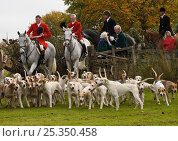 Huntsmen, followers and hounds of The Quorn Hunt arrive in Melton Mowbray for their opening meet, Leicestershire, England, UK, October 2009. Стоковое фото, фотограф Kristel Richard / Nature Picture Library / Фотобанк Лори