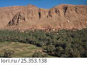 Todra Gorge, Atlas mountains, Morocco. March 2007. Стоковое фото, фотограф Angelo Gandolfi / Nature Picture Library / Фотобанк Лори