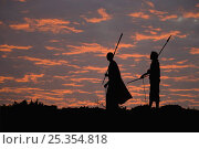 Купить «Young Masai warriors with spears silhouetted against an African Sunset, Kenya. September 2006», фото № 25354818, снято 17 августа 2018 г. (c) Nature Picture Library / Фотобанк Лори