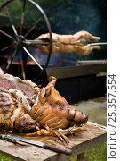 Купить «Hog roast on table, with another roasting on spit. Oxfordshire, UK.», фото № 25357554, снято 21 июля 2018 г. (c) Nature Picture Library / Фотобанк Лори