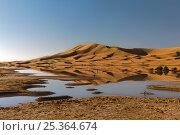 Temporary rain-fed lagoon at Merzouga dunes, Tafilalt, Sahara, Morocco. March 2007. Стоковое фото, фотограф Angelo Gandolfi / Nature Picture Library / Фотобанк Лори