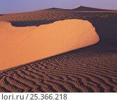 Sand dune ridge, East Mojave Desert, California, USA. Стоковое фото, фотограф Jack Dykinga / Nature Picture Library / Фотобанк Лори