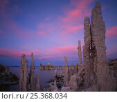 Tufa pinnacles in the sunset afterglow at the edge of Mono Lake, Mono Lake State Reserve, California, USA. Стоковое фото, фотограф Jack Dykinga / Nature Picture Library / Фотобанк Лори