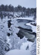 Купить «Ice being drawn into whirlpool, Kitkajoki River, Kuusamo, Oulanka National Park, Finland, February 2009», фото № 25372650, снято 21 июля 2018 г. (c) Nature Picture Library / Фотобанк Лори