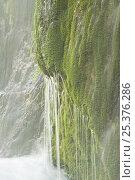Купить «Veliki Prstavci waterfalls, Upper lakes, Plitvice Lakes NP, Croatia, October 2008», фото № 25376286, снято 16 июля 2018 г. (c) Nature Picture Library / Фотобанк Лори