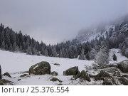 Купить «Lac des Truites in winter, Ballon des Vosges Nature Park, Vosges, Lorraine, France, December 2008», фото № 25376554, снято 19 июля 2018 г. (c) Nature Picture Library / Фотобанк Лори