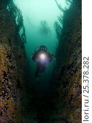 Купить «Klas Malmberg with torch drifting quickly through underwater crevice, Sundströmmen, Bodö, Norway, October 2008», фото № 25378282, снято 20 ноября 2019 г. (c) Nature Picture Library / Фотобанк Лори