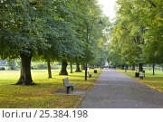 Купить «Paved path and park benches in Andrews Park, Southampton City Centre, Hampshire.», фото № 25384198, снято 16 августа 2018 г. (c) Nature Picture Library / Фотобанк Лори