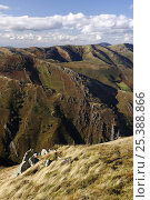Купить «Pyreneean mountain ridges, France / Spain border, autumn 2008», фото № 25388866, снято 28 мая 2020 г. (c) Nature Picture Library / Фотобанк Лори