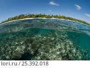 Купить «Split level of coral reef and Sandy Beach Resort, Ha'apai Islands, Tonga, Melanesia, Pacific», фото № 25392018, снято 22 октября 2019 г. (c) Nature Picture Library / Фотобанк Лори