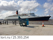 Купить «QE2 arriving in Liverpool during her Farewell Tour, with a Superlambanana looking on. October 2008.», фото № 25393254, снято 17 декабря 2017 г. (c) Nature Picture Library / Фотобанк Лори