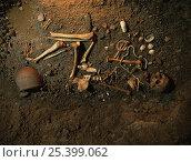 Купить «Skeleton and remains of neolithic man, Cova Museum, Espluga de Francoli, La Conca, Catalonia, Spain, 1998», фото № 25399062, снято 22 июля 2018 г. (c) Nature Picture Library / Фотобанк Лори