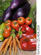 Купить «Freshly harvested home grown organic vegetables, carrots, peppers, courgettes, cucumbers, aubergine, tomatoes, UK», фото № 25404250, снято 17 марта 2018 г. (c) Nature Picture Library / Фотобанк Лори