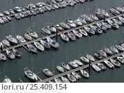 Купить «Port du Moulin Blanc, Brest, Brittany, France 2005», фото № 25409154, снято 22 апреля 2018 г. (c) Nature Picture Library / Фотобанк Лори