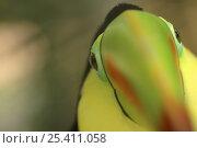 Купить «Keel billed Toucan (Ramphastos sulfuratus), Costa Rica», фото № 25411058, снято 26 апреля 2019 г. (c) Nature Picture Library / Фотобанк Лори