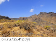 Barranco de Tirajana, Gran Canaria Island, the Canary Isles, Spain, September 2007. Стоковое фото, фотограф Fabio Liverani / Nature Picture Library / Фотобанк Лори